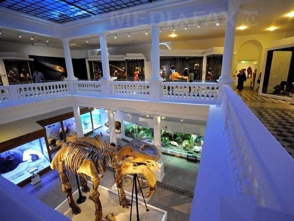muzeul antipa muzee bucuresti