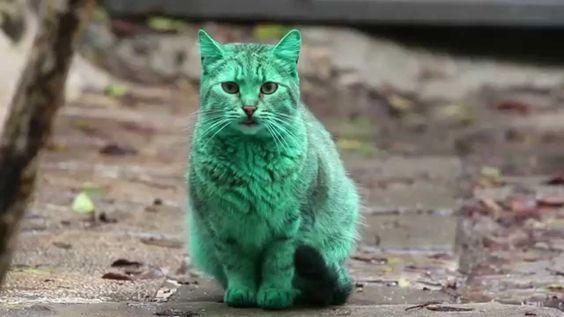 pisica bulgaria orase