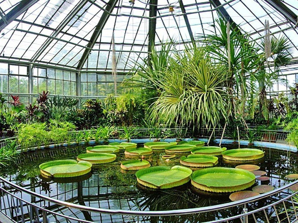 gradina botanica bucuresti locuri de vizitat in bucuresti