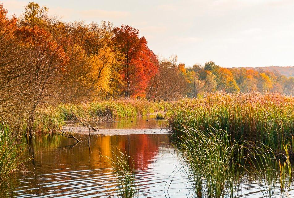 parcul comana delta neajlovului locuri de vizitat langa bucuresti